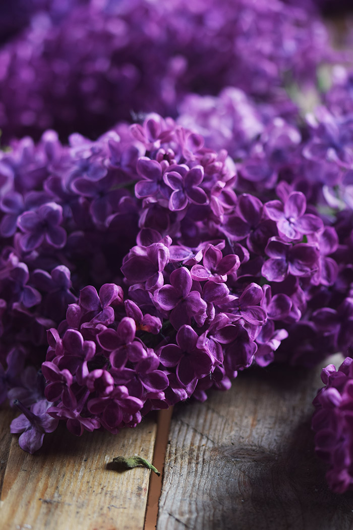 Flieder Blueten Sirup - Lilac Syrup - Fliedersirup (2)